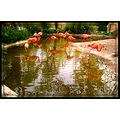 new mexico blog 5 Albuquerque Zoo flamingos reflectionthursday