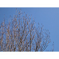 sky bluesky branches winter nature naturefph