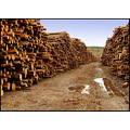 wood lumber trees wet brown norway stack tree rain norwegian
