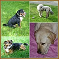 familypetfriday funfriday papagenasdogclub collage
