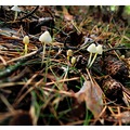 mushroomclub fungi woods nature Bohemia