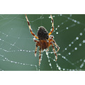 stlouis missouri us usa animal insect spider macro 2006