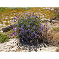 summer bay wildflowers beach oakportfph shadows purple purplefph