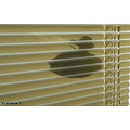 Venetian blinds shadow duck