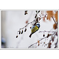bird warbler branch tree winter nature bulgaria nikon sigma
