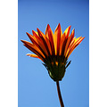 nature flower orange red yellow green blue sky closeup