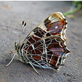 bug nature wonder butterfly