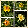 wildflowers yellow blossoms collage