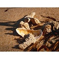 sand shell coral shadow