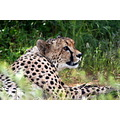 Namibia Cheetah Wildlife Farm Nature