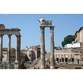 My son took all these pic. I was so tired walking from vatican to this ruin, Palatin.