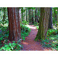 May 10, 2008 - Redwood and Fir Forest Trail