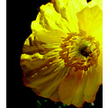 yellow flower pattern light dark