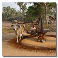 myanmar burma chauk people animal oxcart burmx chaux peopx animx cartx