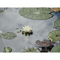 flower flowers nature ponds