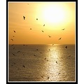 sunset golden gulls birds sea ilfracombe devon nature somersetdreams