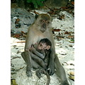 monkey wildlife baby mother
