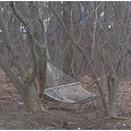 snow gone from hammock buried in the woods