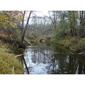 latvia autumn misa river nature tree forest trees landscape water green