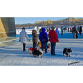 dogs winter ice snow redriver winnipeg