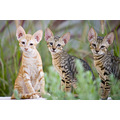cats kitten animal nature