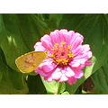 Beautiful butterfly beautiful flower - God's special creations - gifts to a human kind.