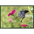 The last one of the Sunbird lady, A bit ironic, but the most focused and detailed pic of the s...