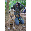 high ropes course dog dogs pet pets