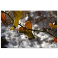 greenbrair thorns vine nature winter