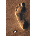 footprint shell sand coast