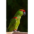 The Living Desert bird parrot pankey wildspirit