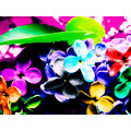 lilac creation rainbow colours cheerful life flowers