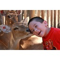 Deer Joshua friend