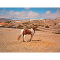PortoSanto island Madeira Portugal 2007 holiday horse mountains dry view