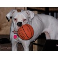 boxer lulu basketball