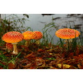 shutterlyspectacularphotography Mushrooms JulieButlerHansonWildlifeRefuge