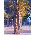 2008 madeira island portugal machico dusk palm tress plaza lampposts