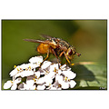 insect nature fly