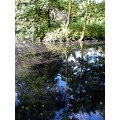 beddington park reflection