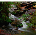 Nature forrest water stream