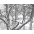 trees snow white winter seasons weather wood cold