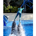 seaworld orlando florida show entertainer dolphins skiing
