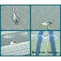 Gearhart Oregon Beach Feathers Collage