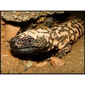 Second shot of Gila #1