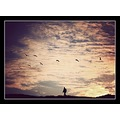 Sunset Birds Trek Walk Isolation Hiking Hill Landscape Portrait