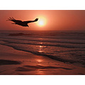 Sunset Vulture Jan 8 2008