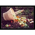 Autumn Apples Fall Basket Leaves Garden Red Yellow Green