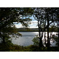 Loch of the Lowes Perthshire Scotland Trees Shrubs