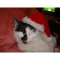 this is fuzz ready for x-mas