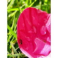 ant flower grass red